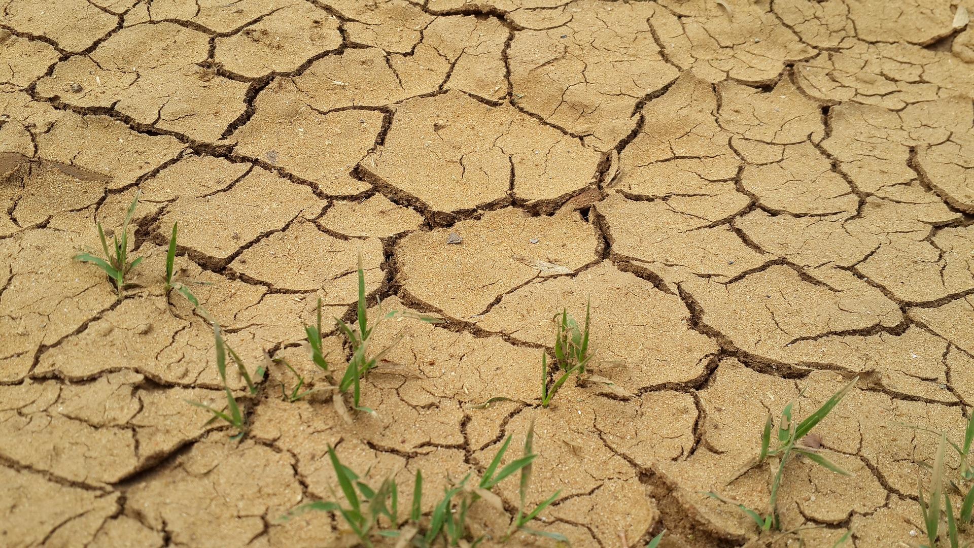 Dürre in der Landwirtschaft. © Wouter Hattingh